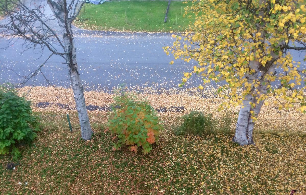 """Jag kallar den """"Höstvy från ett arbetsrumsfönster""""."""
